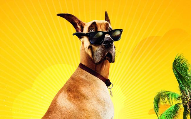 Пальма, дерево, очки, желтый, собака, дог, мармадюк Скачать, картинка, изоб
